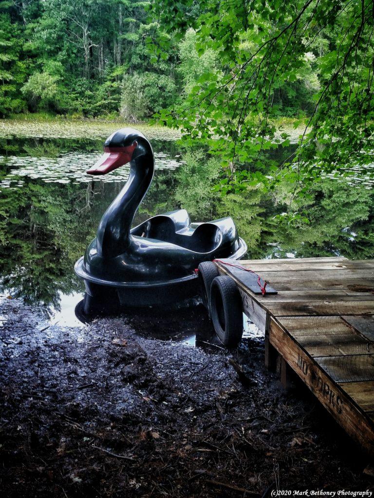 Black Swan pedddleboat docked